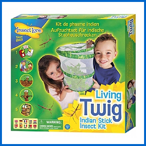 Kids Stick Insect Kit