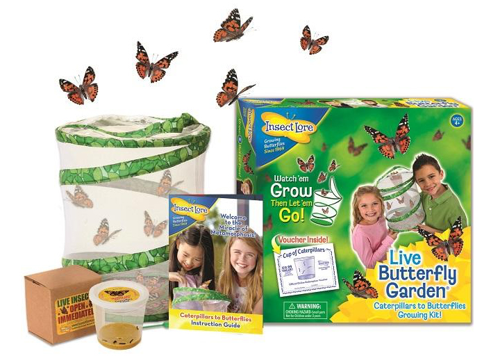 Butterfly Lifecycle Kits