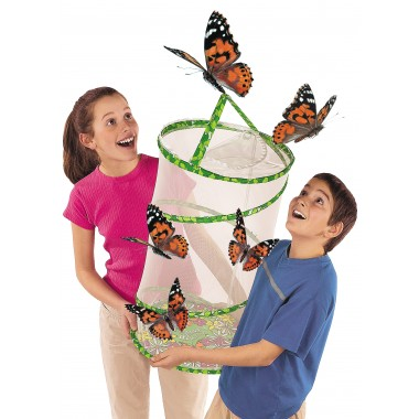 Classroom Butterfly Set