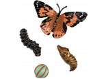 Giant Butterfly Set with Life Cycles Stages Figures